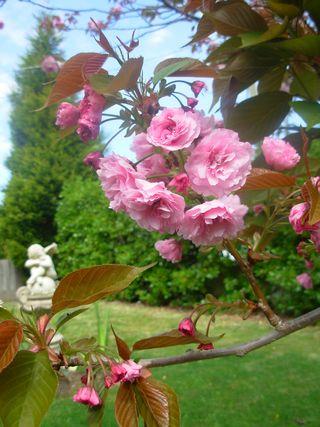 Spring garden 005